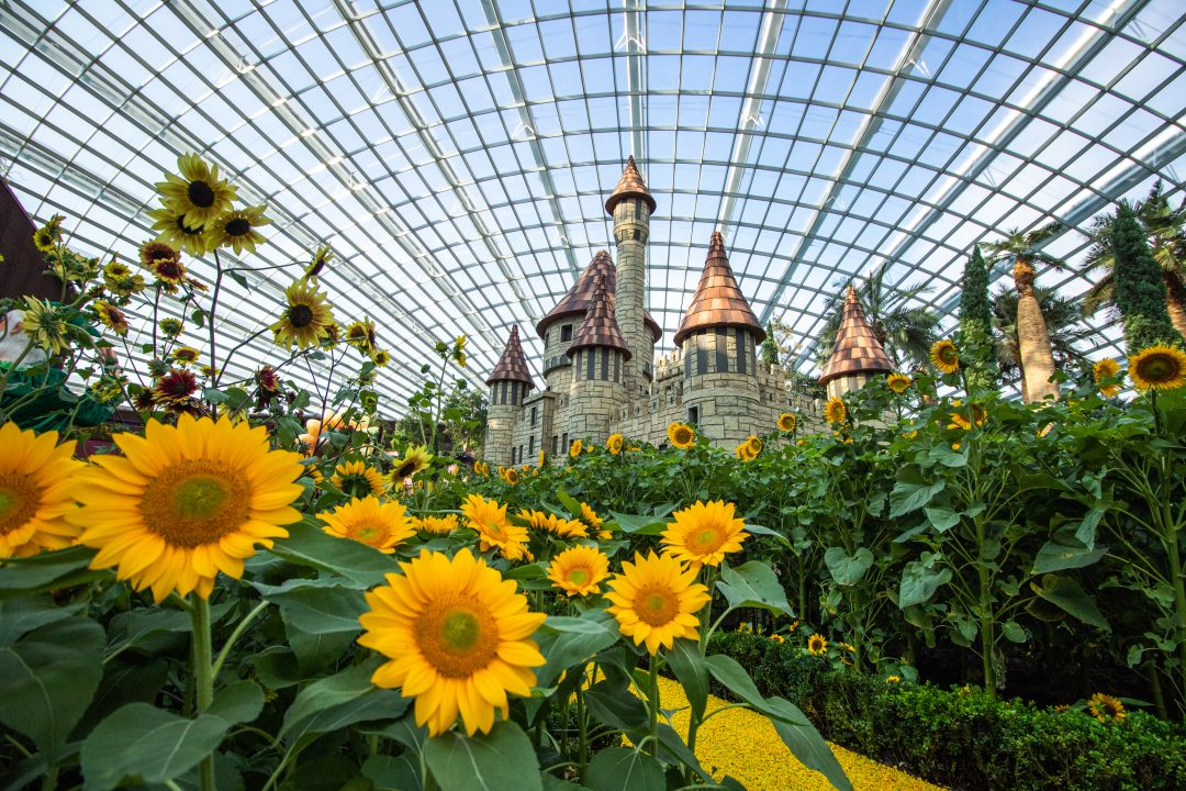 Sunflower Gardens by the Bay